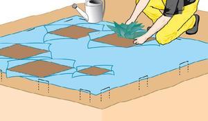 KROK II - Sadzenie roślin